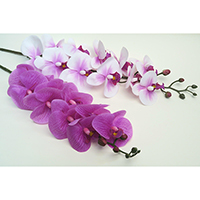 Real Touch Phalaenopsis