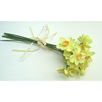 Narcissus Bundle x 6