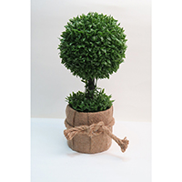 Hedyotis Lvs Topiary on Jute Pot