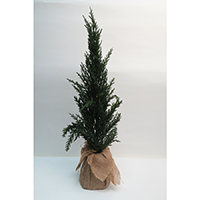 Pine Tree on Burlap Base
