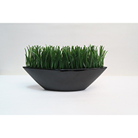 Grass on Clay Pot