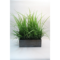 Mixed Grass on Wooden Pot