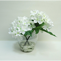 Hydrangea on Glass Vase