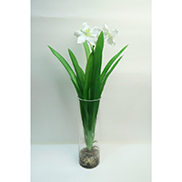 Narcissus on Glass Vase