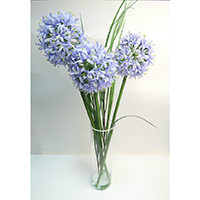 Allium & Grass on Glass Vase