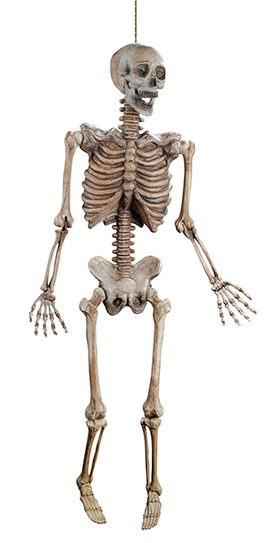 60 inches Skeleton