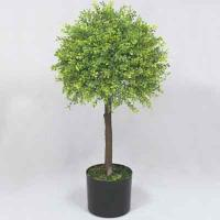 28 inches Boxwood Single Topiary on plastic trunk in pot # Green
