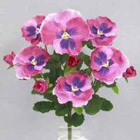 Pansy bush 14 inches # Pink