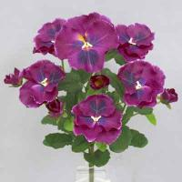 Pansy bush 14 inches # Violet