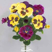 Pansy bush 14 inches # Yellow/Violet