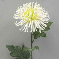 Plastic Single Fuji Mum 26 inches # White