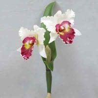 Cattleya Orchidx2 17 inches # White/Red center