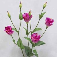 Lisianthus 31 inches # Violet