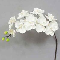 Super Orchid x9 41 inches # White