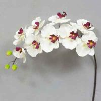 Super Orchid x9 41 inches # Cream/But