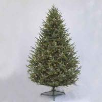 Carolina Frasier Fir 7' Ltd Tree