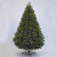 Chester Pine 7' Ltd Tree