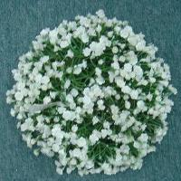 3 inches MP GYPSOPHLIA CANDLE RING