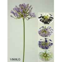 29 inches Large agapanthus spray w/17 fls & 40 bud.