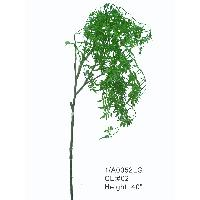 Sell 40 inchesMINI CARPINUS SPRAY