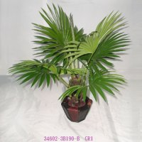 2' FAN PALM TREE IN POT, G11/34602-3B190-B