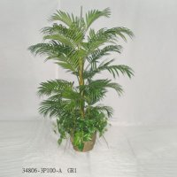 6' PARLACOUR PALM TREE W/FOLIAGE IN POT