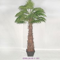 9' FAN PALM TREE IN POT