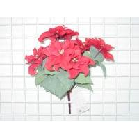 POINSETTIA /BUSH X 7