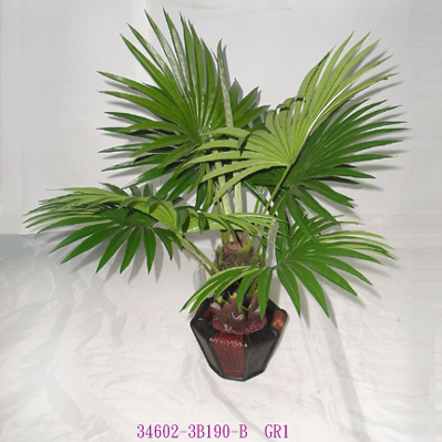2' FAN PALM TREE IN POT