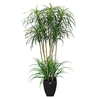 5 ft Narrow Dracaena Artificial Tree with Dirt and Wooden Pot., H15-P1/T-AT5441/60L