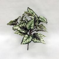 Begonia Foliage Bush x 5