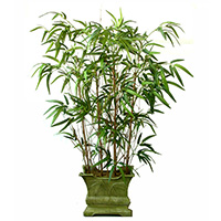 42 inches Twiggy New Green Bamboo Tree x 4w/ 648Lvs.